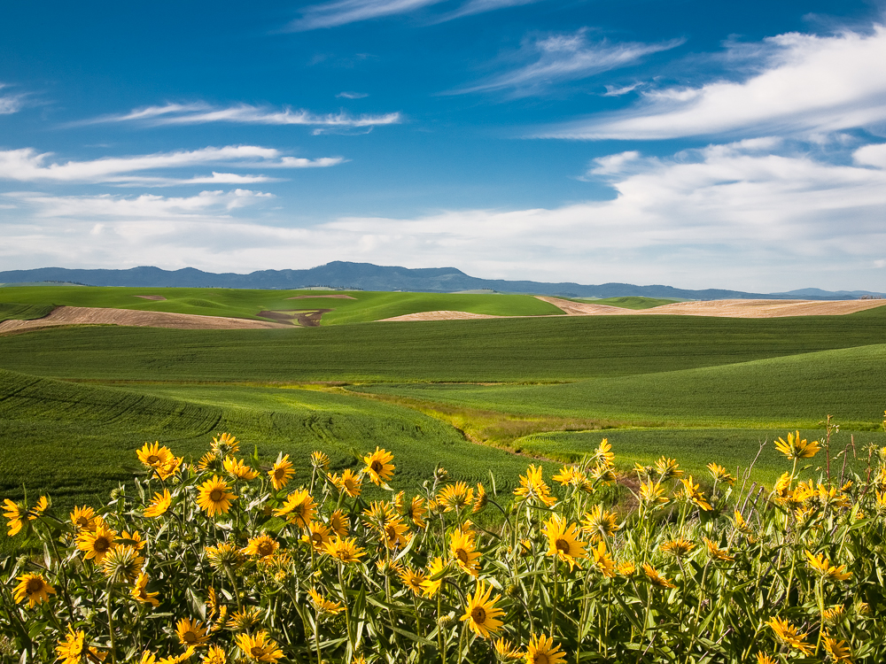 the Palouse and Moscow Mountain